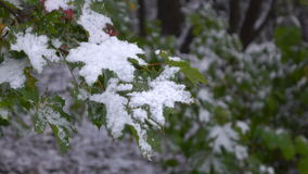 Green leaves with snow 2. Green Leaves Covered with Snow stock video