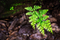 Green leaves soft focus closeup Royalty Free Stock Images