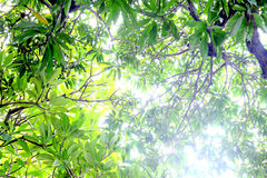 Green leaves and specks of light Stock Images