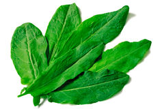 Green leaves of spinach on a white background Stock Images