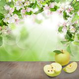 Green Leaves, Spring Flowers, Apple Fruit. And Gray Empty Wooden Board on Abstract Soft Focus Bokeh Light Background Stock Photo