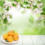 Green Leaves, Spring Flowers, Apricot Fruit. Apricot fruits on abstract background with green leaves, spring flowers and white empty wooden table with copy space Royalty Free Stock Image