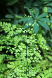Green leaves of the spring. Season Stock Photography