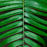 Green leaves with stem for pattern Stock Photo