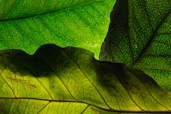 Green leaves - stock image Stock Image
