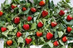 green leaves strawberries Royaltyfria Foton