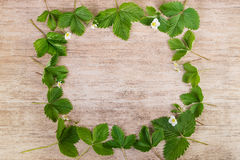 Green leaves of strawberry decorative frame on wooden background Stock Images