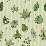 Green leaves striped background Stock Image