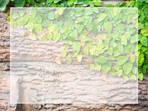 Green leaves stuck on wood White frame for text and content input Copy Space. Suitable for as background.  Royalty Free Stock Photo