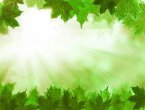 Green Leaves. Summer Background Royalty Free Stock Photos