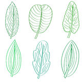 Green leaves summer icons set for design. Stock Images
