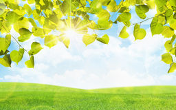 Green leaves and sun Royalty Free Stock Photography