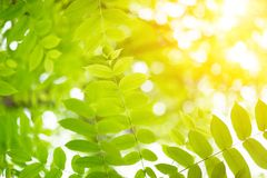 Green leaves with sun Stock Images