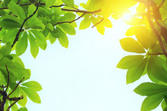 Green leaves and sun light at spring day Stock Images
