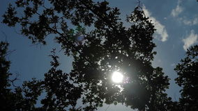Green leaves with sun ray. Blue sky stock video footage