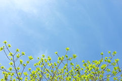 Green leaves and sun on sky. Royalty Free Stock Photos