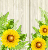 Green leaves and sunflowers Royalty Free Stock Photos