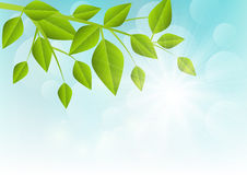 Green leaves on sunny background Stock Photos