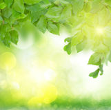 Green  leaves at sunny day Stock Photo