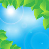 Green leaves on a sunny sky background Royalty Free Stock Images