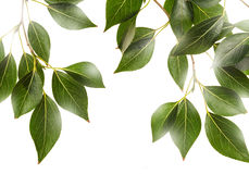 Green leaves with sunshine Royalty Free Stock Photo