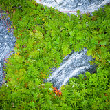 Green leaves surrounding small rocks Stock Image