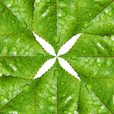 Green leaves symmetry and environmental symbol. Abstract background with leaves full of water drops royalty free stock image