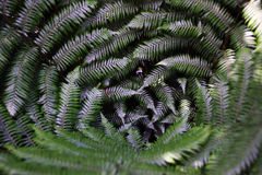 Green Leaves. Taken at a temperate rainforest in Sydney during a Summers Day Stock Image