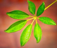 Green leaves on terracotta background royalty free stock photography
