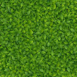 Green leaves texture. Vector illustration Royalty Free Stock Photos