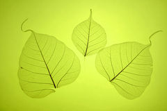 Free Green Leaves Texture Royalty Free Stock Images - 4184949