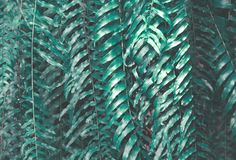 Green Leaves Texture Background. stock photos