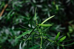 Green leaves texture, background. Plants and greenery in botanical garden. Royalty Free Stock Photos