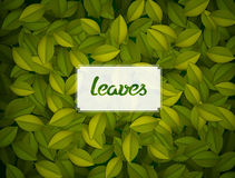 Green leaves texture. Royalty Free Stock Photos