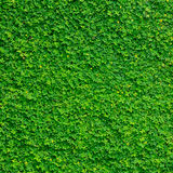 Green leaves texture backgrounds Royalty Free Stock Photo