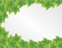 Green leaves texture. Vector Royalty Free Stock Images
