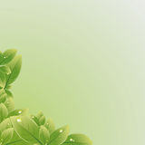 Green leaves texture. Vector illustration. Royalty Free Stock Photography