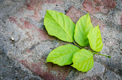 Green leaves on textured background Stock Photos