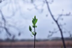 Green leaves on top of a branch. Green leaves top branch river spring stock images