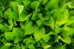 Green Leaves From Top Stock Photography