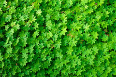 Free Green Leaves Top View Nature Background Stock Image - 23649931