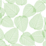 Green leaves. Green transparent summer leaves background Stock Photo