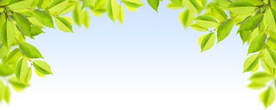 Green leaves of tree on blue sky. Frame Royalty Free Stock Photos