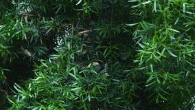 Green leaves on tree in botanical garden.  stock video