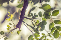 Green Leaves in a Tree Branch Stock Images