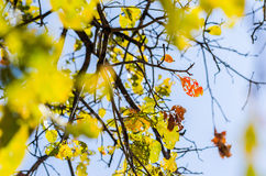 Green leaves and tree branches Royalty Free Stock Photo