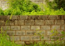 Green leaves and tree branches on brick wall background, natural green background stock photo