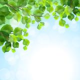 Green leaves tree branches vector background. Green leaves, tree branches, vector summer background. Birch border foliage on blue sky backdrop Royalty Free Stock Photo