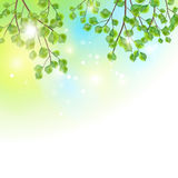 Green leaves tree branches vector background Stock Photos