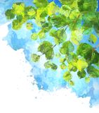 Green leaves tree branches vector watercolor Royalty Free Stock Images